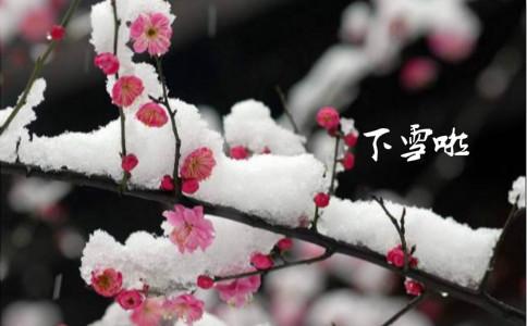 第一场雪日记300字三篇